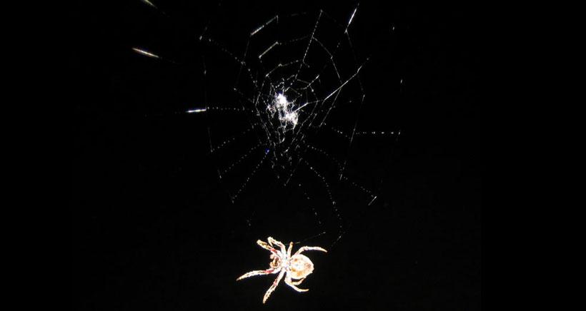 Visita nocturna a la exposición de arañas de la Casa de las Ciencias