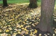 ¿Qué esconden las hojas de los árboles? descúbrelo en los talleres del Aula Didáctica de La Grajera
