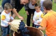 Vendimia con los niños en La Rioja
