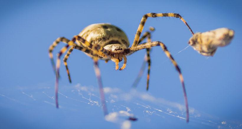 Visitas para asistir a la alimentación de arañas y escorpiones en la Casa de las Ciencias