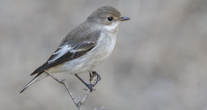 Jornada de observación y anillamiento de aves en la Laguna de Hervías