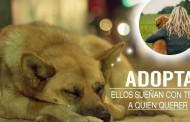 Edúcales en el respeto animal: V Salón de la adopción de animales abandonados