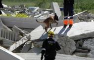 Exhibición de perros de rescate, juegos para niños, hinchables y canicross, este sábado en Valdegastea