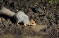 Talleres en La Grajera: este fin de semana, estudiamos las huellas de los animales