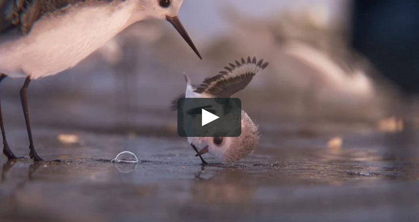 """Piper, el corto de Pixar considerado como """"el más bello de Disney"""""""