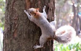 Explora los rastros de los animales que viven en La Grajera