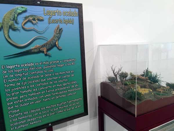 replicas-reptiles-y-serpientes-casa-ciencias-1