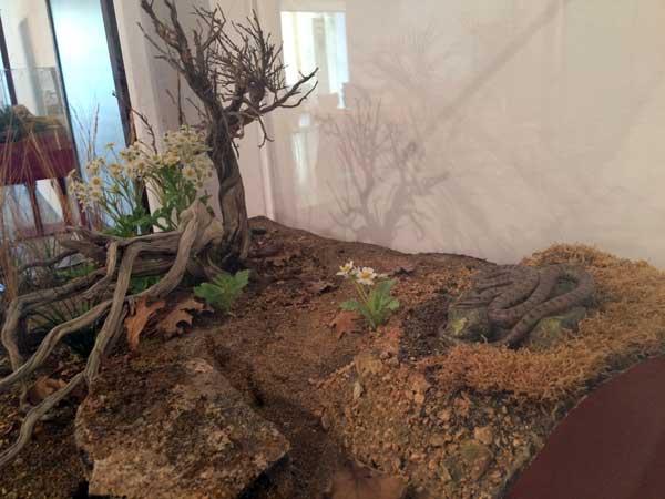 replicas-reptiles-y-serpientes-casa-ciencias