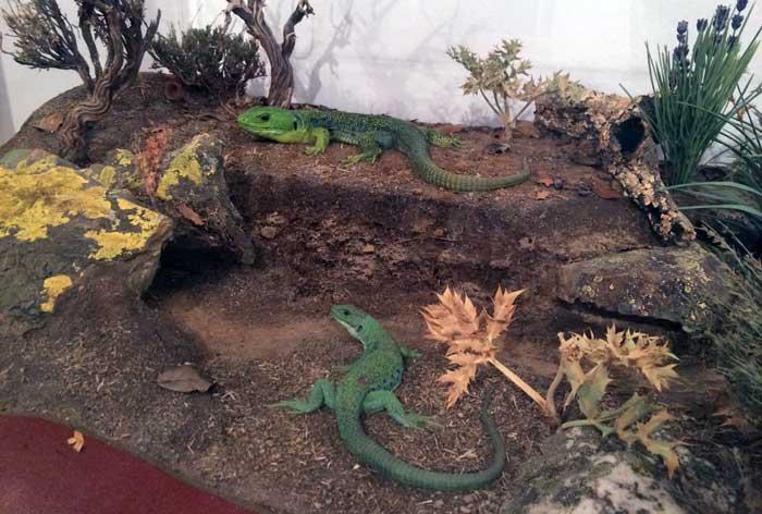Réplicas exactas de anfibios y reptiles, en la Casa de las Ciencias