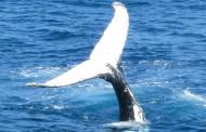 Taller de biología marina para niños en Villamediana
