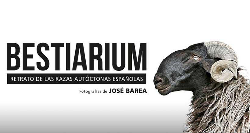 """""""Cara a cara"""" fotográfico con los animales de España"""