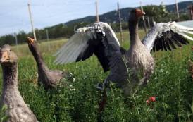 Visitas a la granja de ocas de Ocón