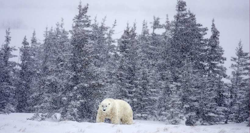 Un viaje al Polo Norte, desde el centro de Logroño