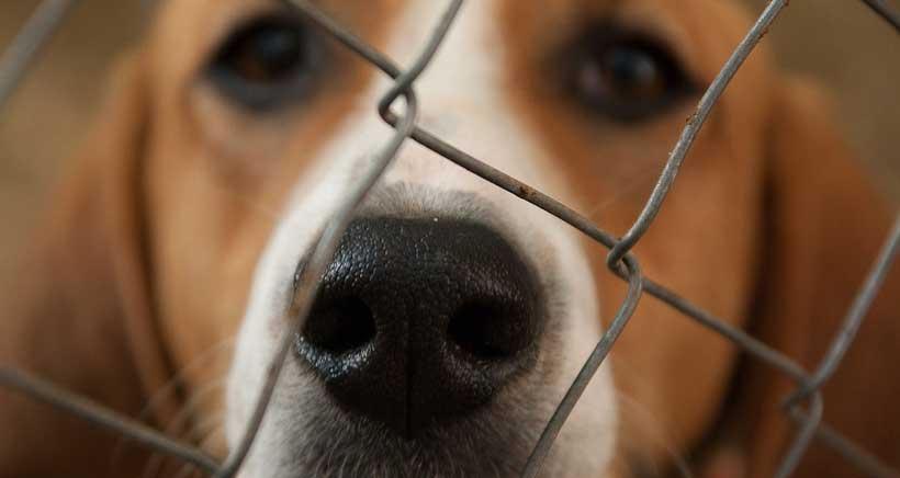 La protección de los animales llega a las aulas de Logroño