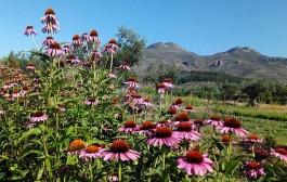 Conoce el mundo de las plantas aromáticas este sábado en Préjano