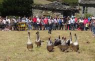 Exhibición de perros pastor en Viana