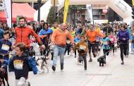 Participa en la Liga escolar de Canicross de La Rioja