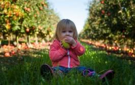 Más fruta y menos bollos