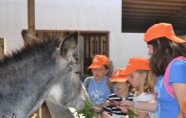 Animales, atracciones y naturaleza en los campamentos de Sendaviva