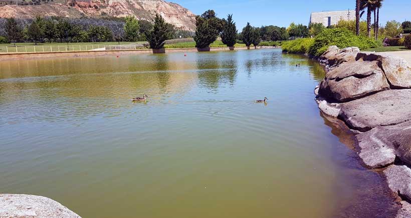 estanque-patos-parque-ribera