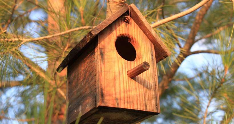 Limpieza y revisión de casitas para pájaros en Ribavellosa