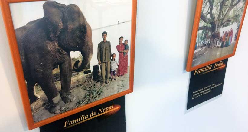 Exposicion-familias-biblioteca-Rafael-Azcona-2