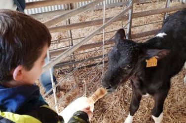 granja-escuela-encinar-visitas-familias