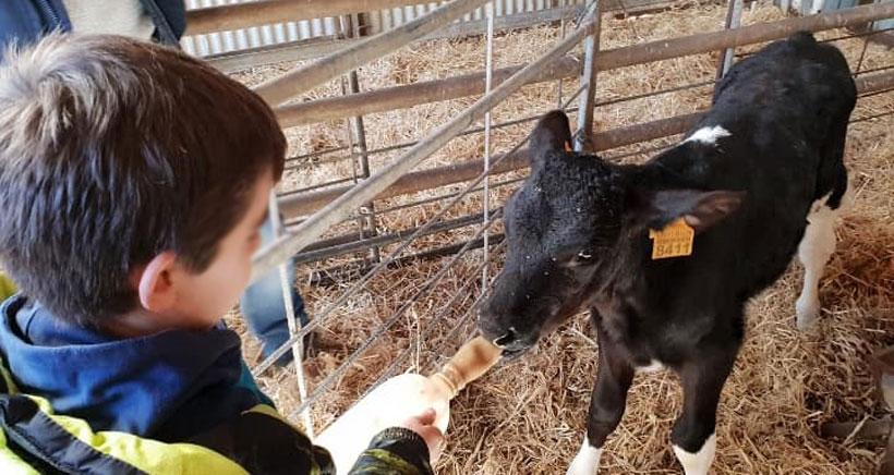 Un día en la granja-escuela El Encinar