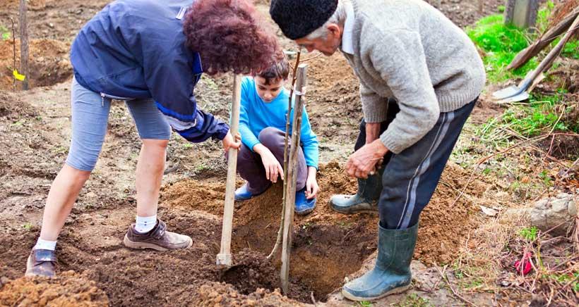 Sueños por cumplir: plantar un árbol