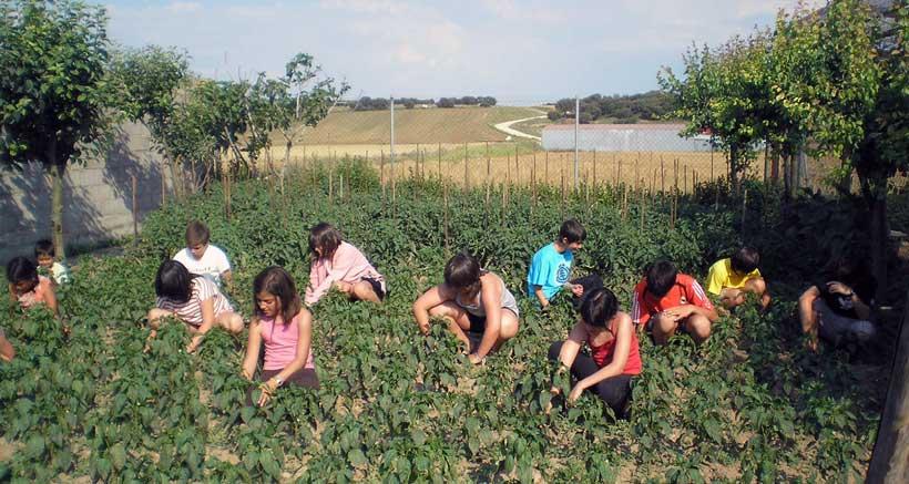 Campamentos-verano-granja-escuela-el-encinar