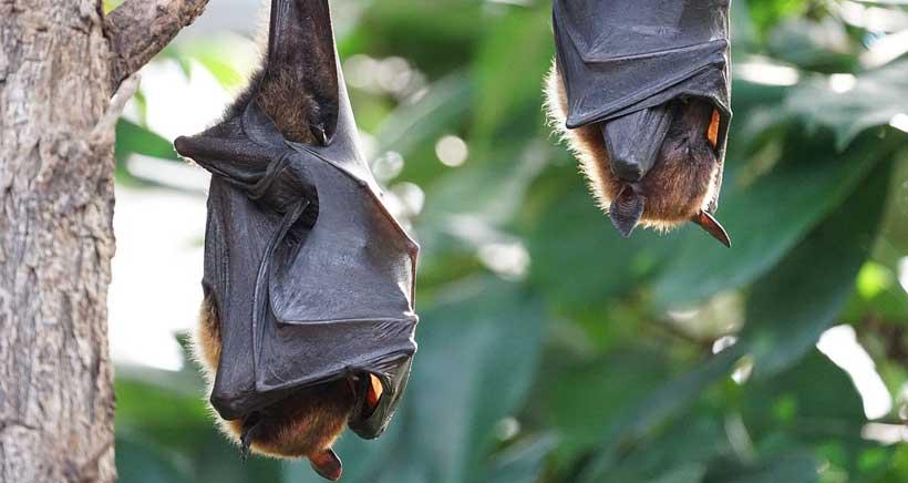 Murciélagos, búhos y lechuzas… Halloween también llega a La Grajera