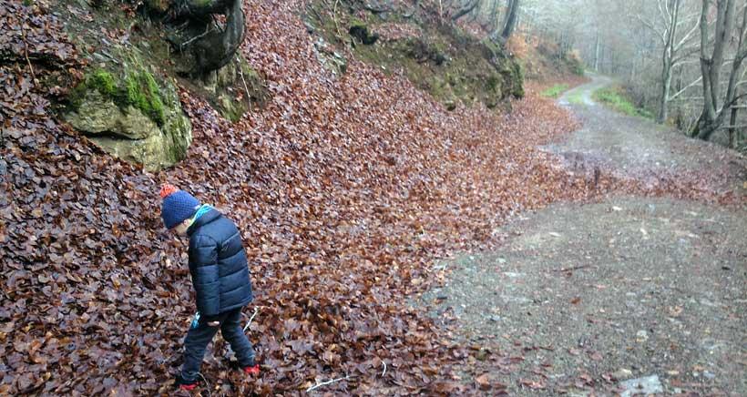 De excursión con niños al hayedo de El Rajao (Tobía)