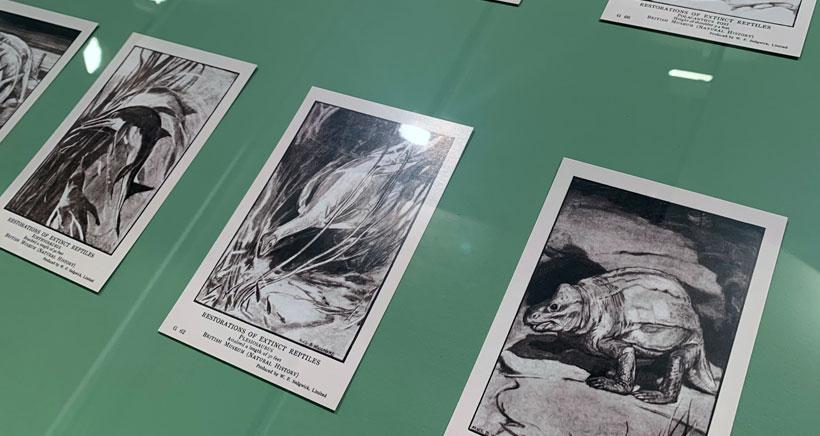 paleontologas e ilustradoras Casa Ciencias