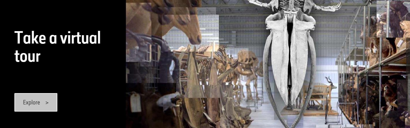 Tour virtual Museo Historia Natural Lodon