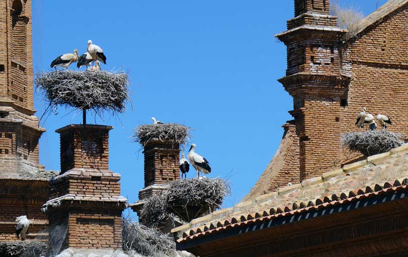 alfaro-excursion-ciguenas2