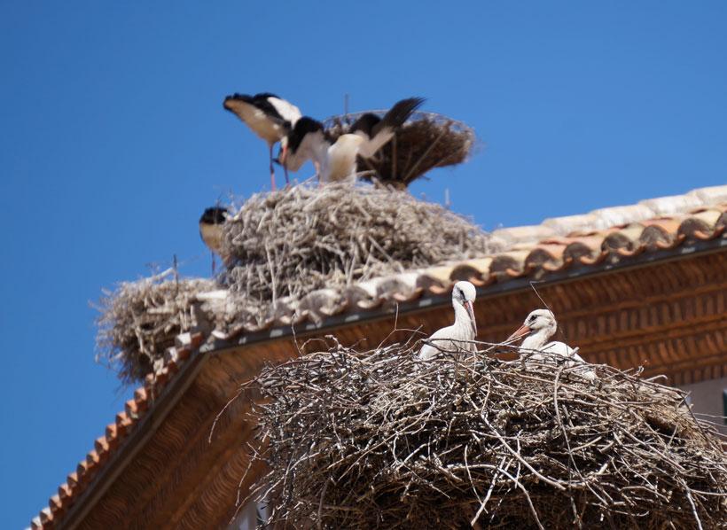 De excursión a… Alfaro, la guardería de cigüeñas más grande de Europa