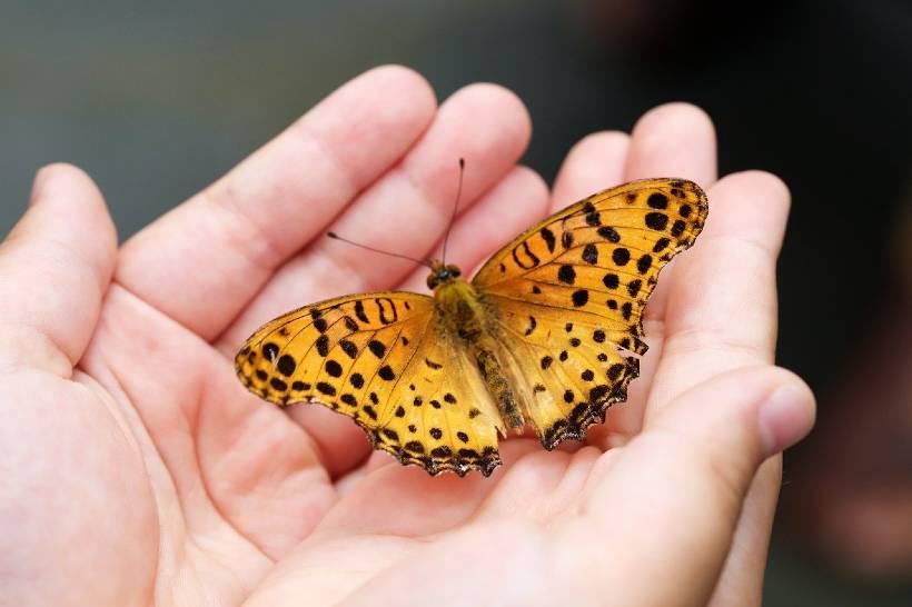 ¿Sabrías decir cuántas especies de mariposas habitan en La Grajera?