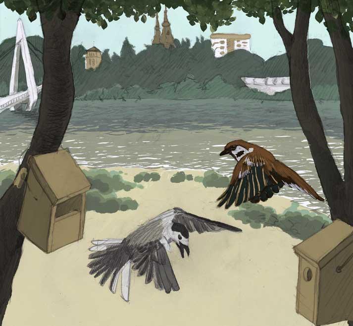 Las aves del Ebro buscan un hogar más seguro ¿les ayudas?