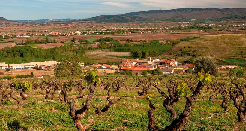 Cultura del vino, naturaleza y gastronomía en familia en la Ruta del Vino Rioja Alta