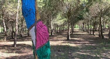 Bosque-Biodivertido-grajera