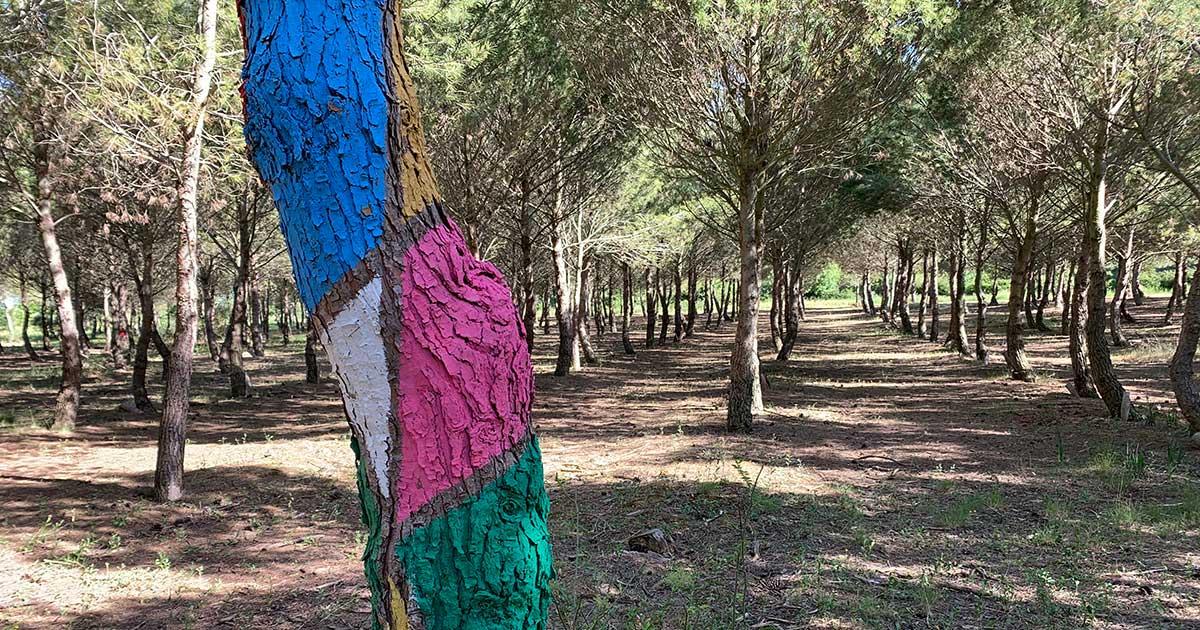 """Colabora en la construcción del primer """"bosque biodivertido"""" de La Rioja"""