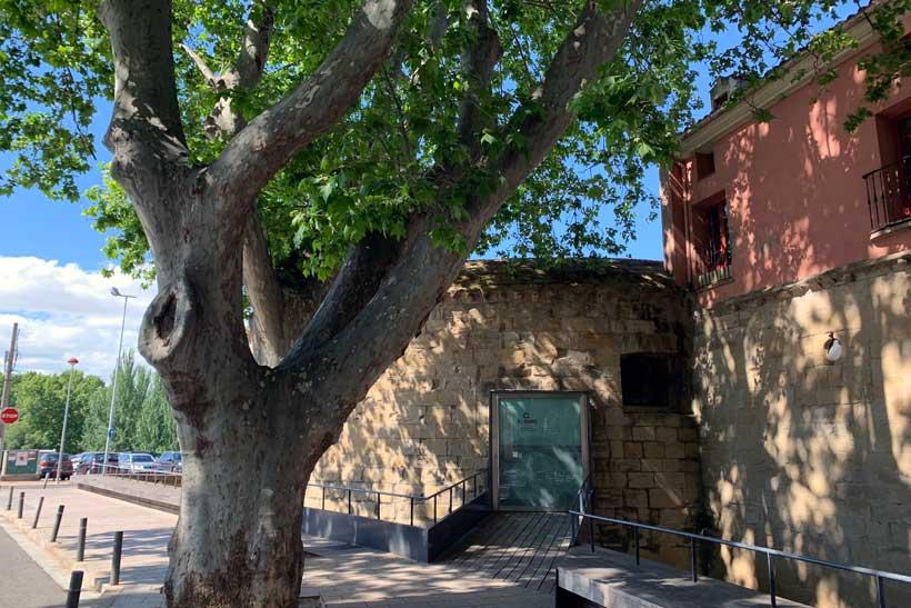 Conociendo los Árboles Singulares de Logroño
