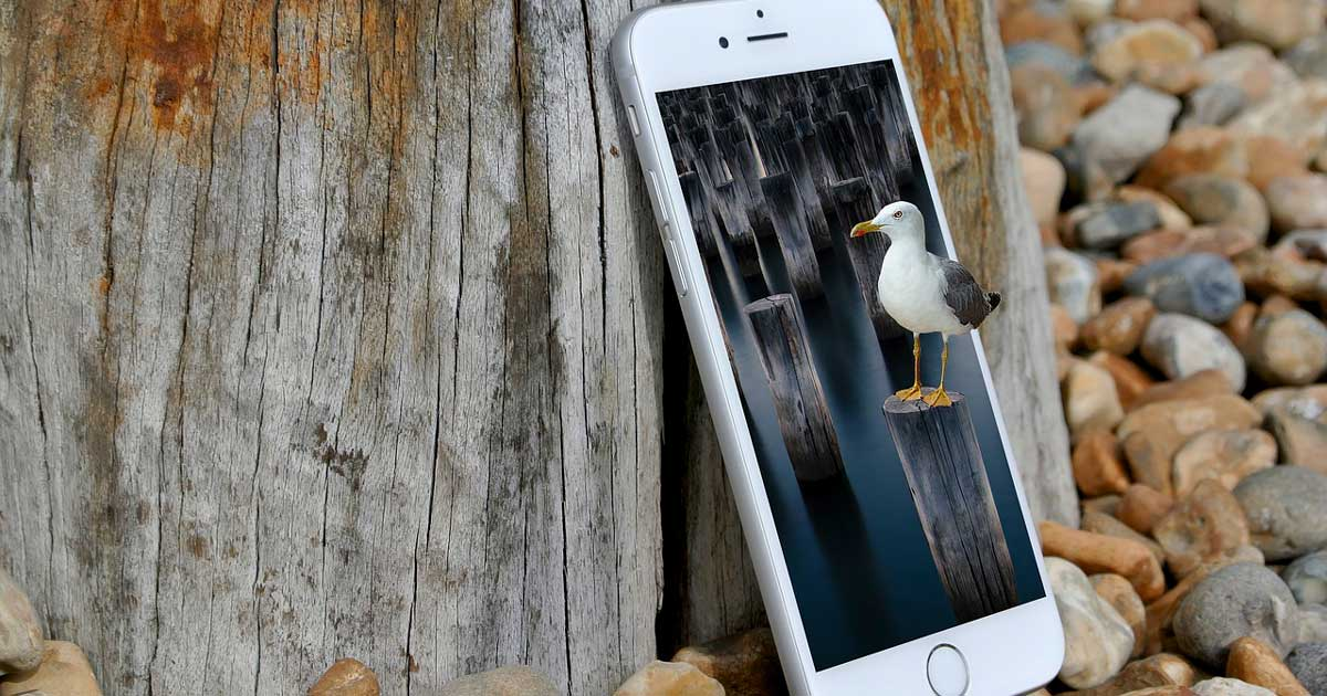 Apps imprescindibles para pasear por la naturaleza