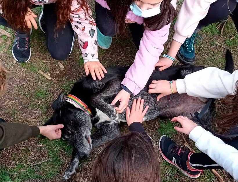excursiones-madreselva-se-admiten-perros-educados
