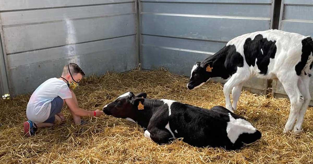 Día de fiesta en la granja escuela El Encinar