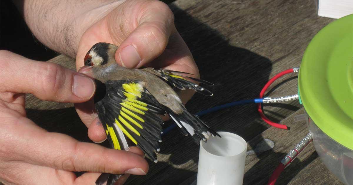 Jornada de acercamiento al anillamiento de aves