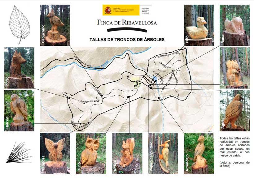 ruta-tallas-troncos-arboles-Ribavellosa