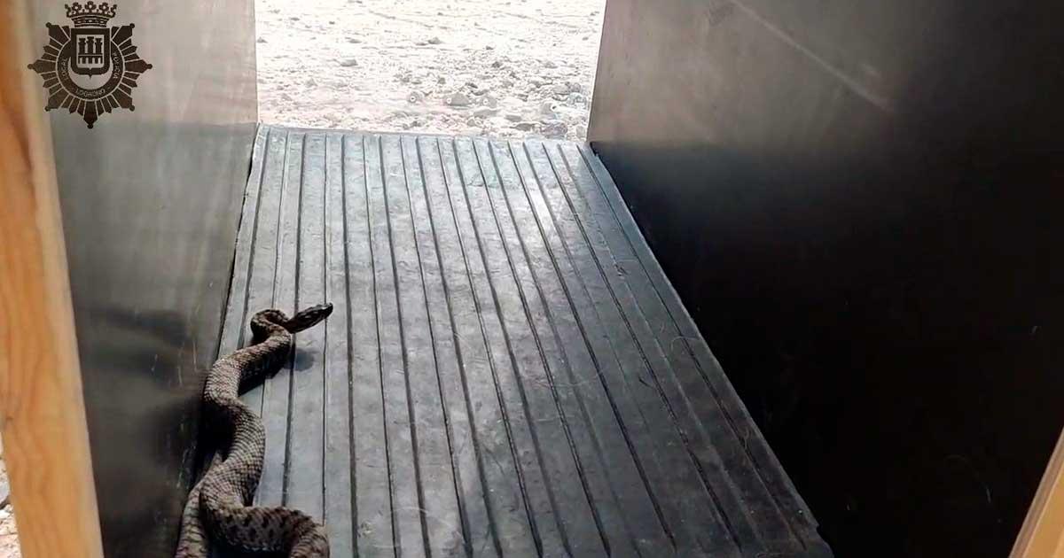 La Policía Local de Logroño retira una víbora en la calle Chile