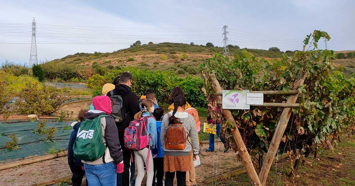 Escolares de Logroño participan en la Semana de la Vendimia